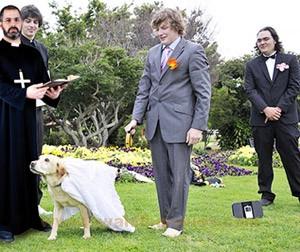 dog-marriage